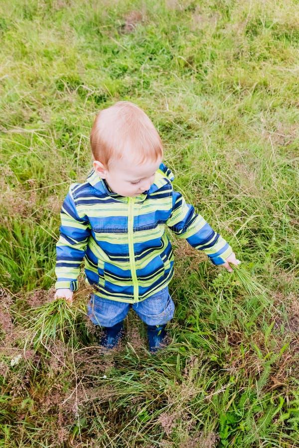 Uma criança pequena está rasgando uma grama fotografia de stock royalty free
