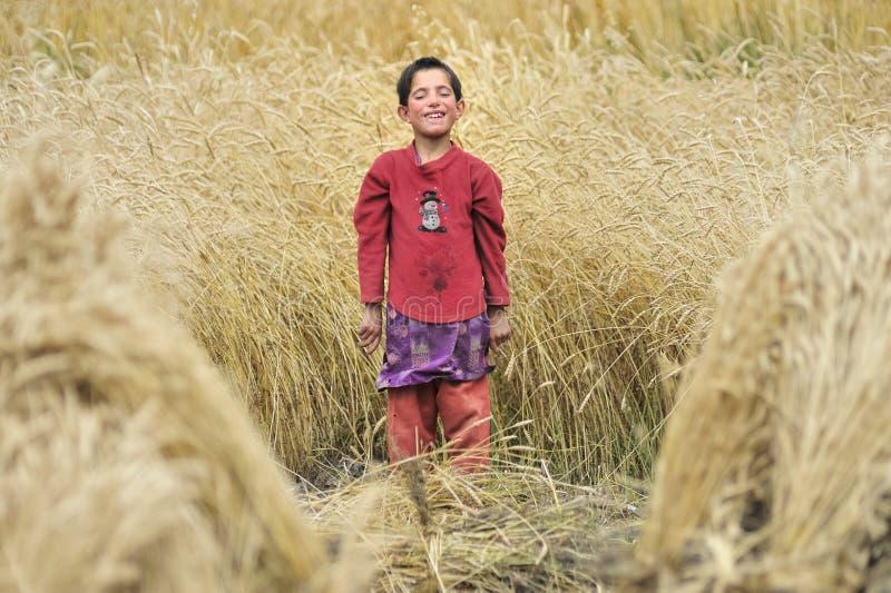 Uma criança que trabalhe e recolha a grão do campo foto de stock royalty free