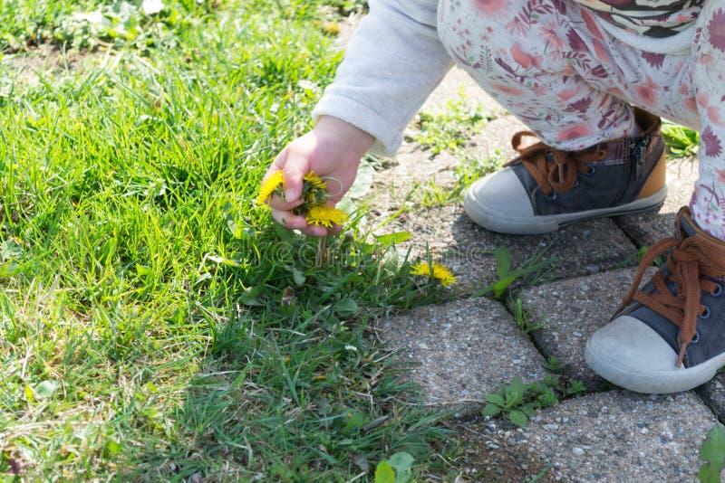 Uma criança rasga uma flor foto de stock