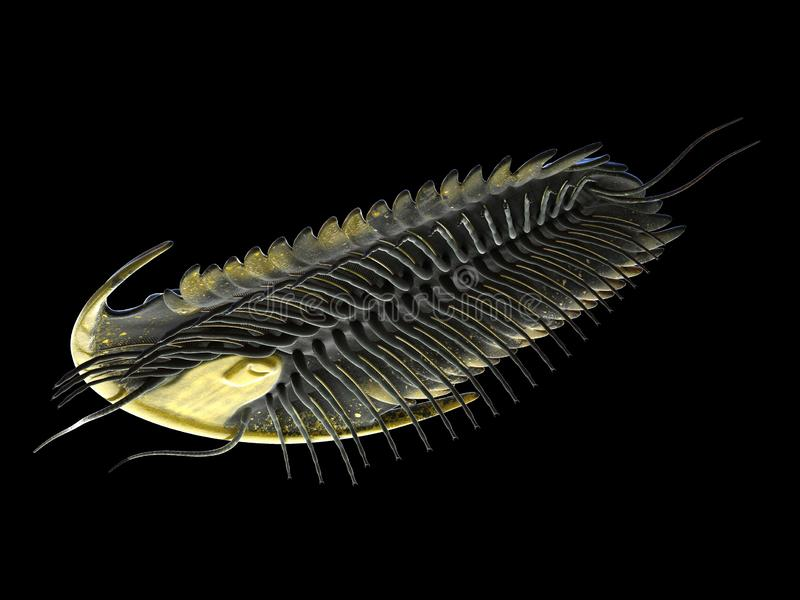 uma criatura marinha pré-histórica - trilobite ilustração royalty free