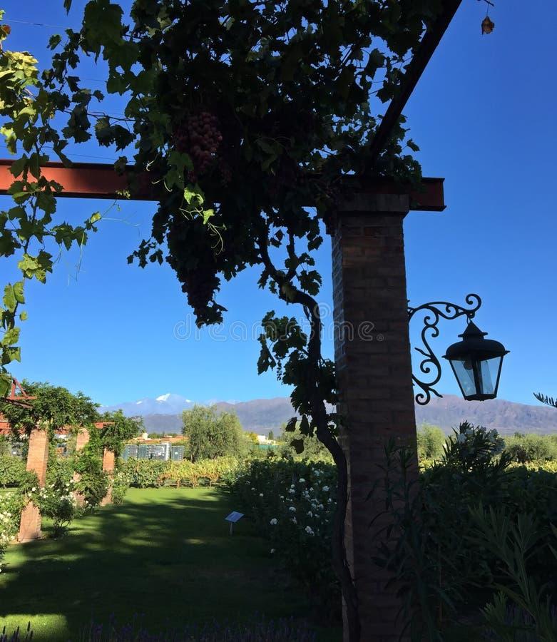 Uma das adegas múltiplas no paga de Andes, Mendoza, Argentina fotos de stock royalty free