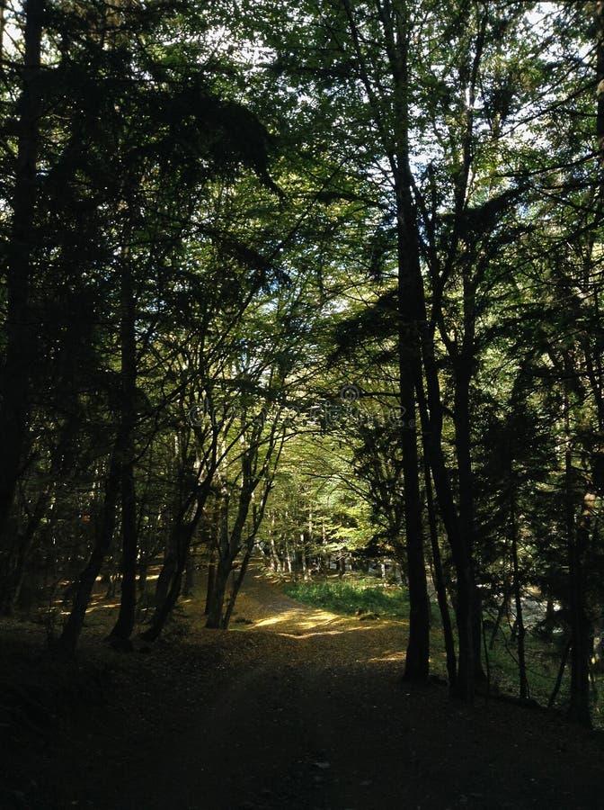 Uma entrada de automóveis dobra a estrada de terra verde direta e densa da floresta através de uma floresta densa fotografia de stock royalty free