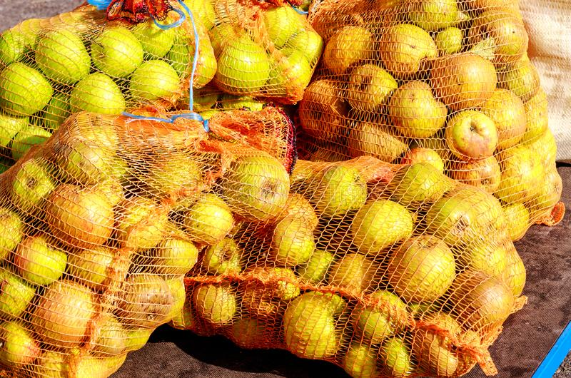 """Uma entrega nova sacos líquidos a um †alemão da adega da cidra """"completamente de maçãs frescas bonitas imagens de stock royalty free"""