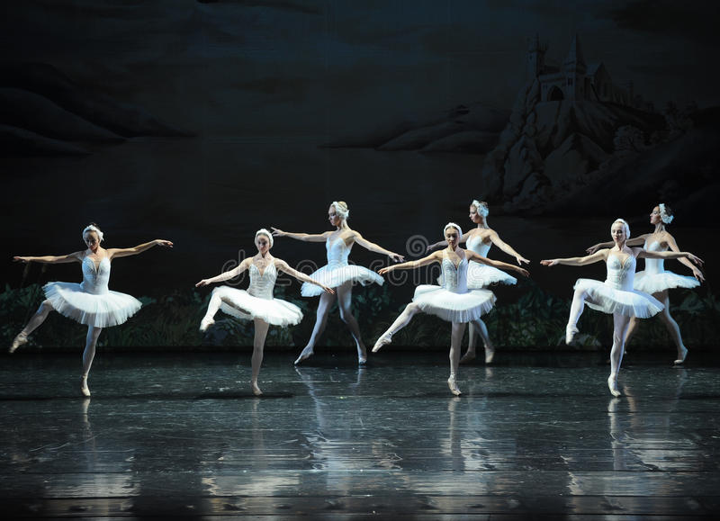Uma equipe do cisne-bailado branco O Lago das Cisnes imagens de stock