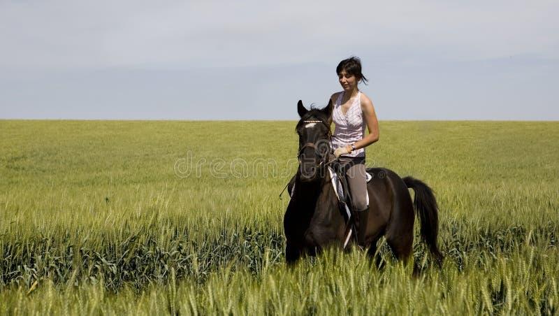 Uma equitação fêmea em um cavalo preto fotografia de stock