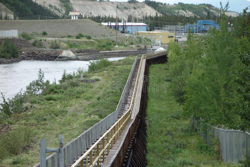 Uma escada salmon perto da represa no whitehorse foto de stock