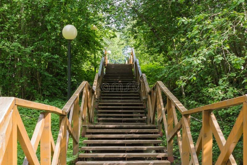 Uma escadaria de madeira em uma floresta verde fotos de stock royalty free