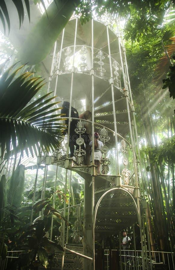 Uma escadaria nos trópicos, jardins de Kew imagem de stock
