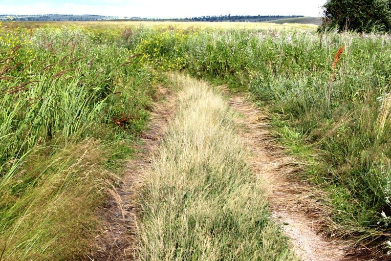 Uma estrada à terra em um campo com grama alta na área de Krasnoyarsk em Rússia fotografia de stock