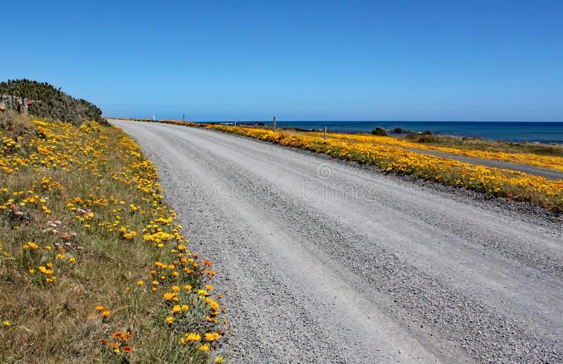 Uma estrada abandonada com as flores amarelas brilhantes de cada lado passa perto do oceano no cabo Palliser, ilha norte, Nova Ze foto de stock royalty free