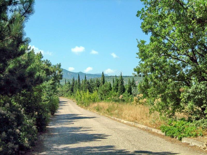 Uma estrada asfaltada estreita em um dia ensolarado quente após árvores sempre-verdes e a grama sol-chamuscada fotos de stock