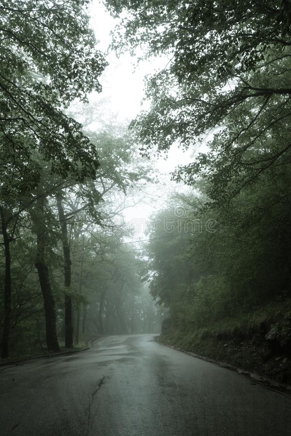 Uma estrada asfaltada que atravesse uma estrada estreita Montenegro da floresta misteriosa escura enevoada do pinho e ?rvores ver imagens de stock