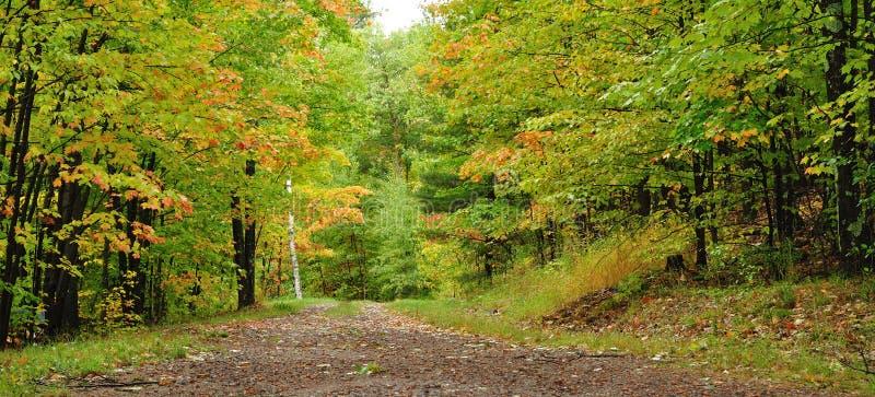 Uma estrada através das madeiras fotografia de stock