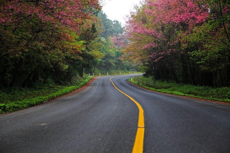 Uma estrada com flor de cereja foto de stock