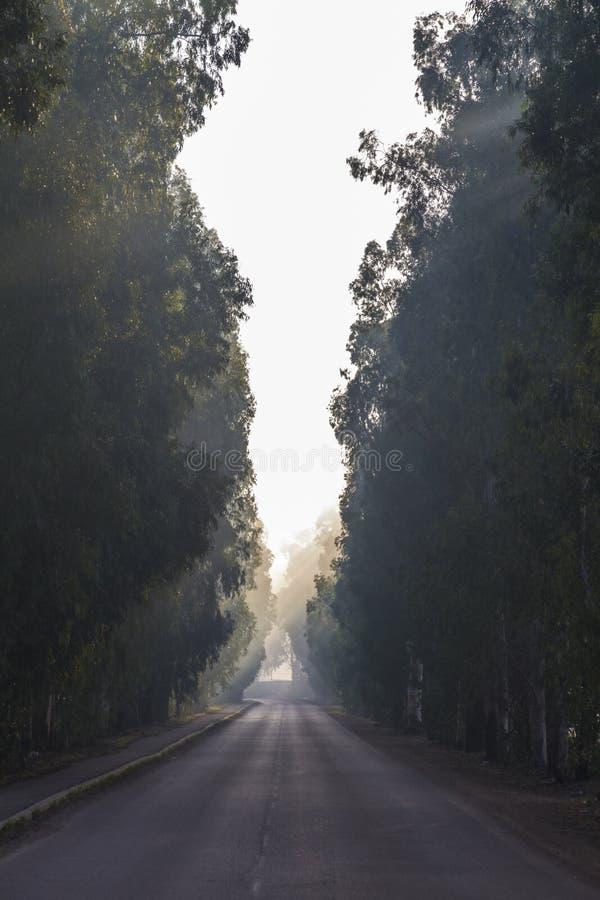 Uma estrada curvy em uma manhã nevoenta que atravessa uma floresta em Israel fotos de stock royalty free