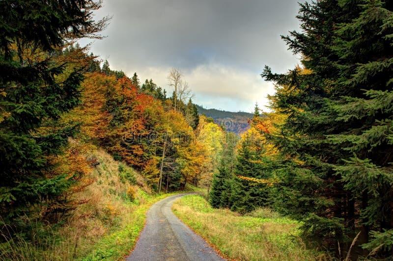 Uma estrada de floresta com cores do outono imagem de stock royalty free