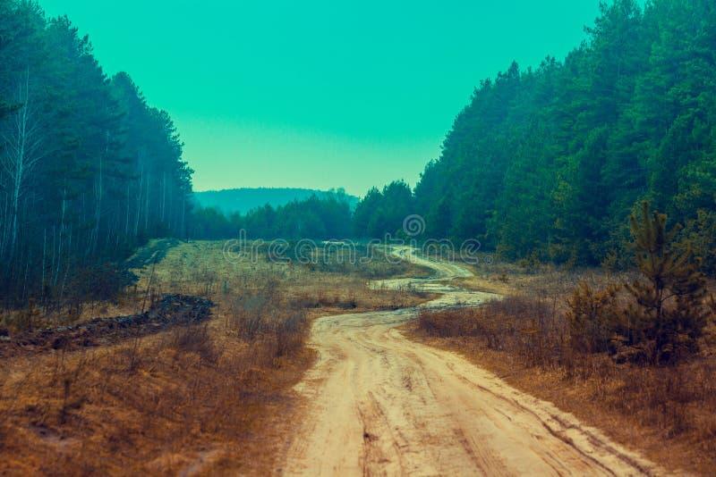 Uma estrada de terra do enrolamento na floresta foto de stock royalty free