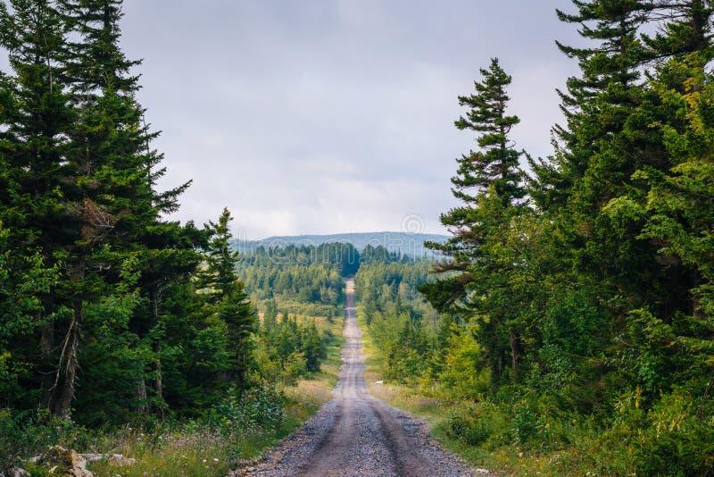 Uma estrada de terra e pinheiros em Dolly Sods Wilderness, floresta nacional de Monongahela, West Virginia imagens de stock