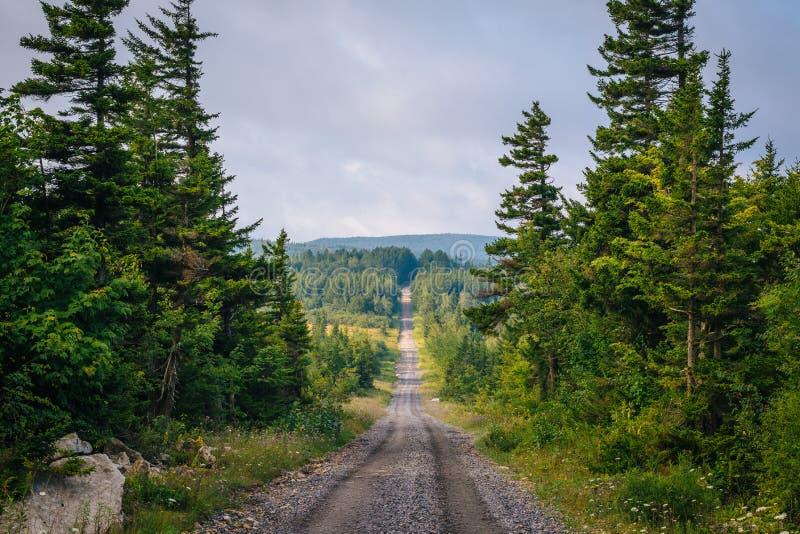 Uma estrada de terra e pinheiros em Dolly Sods Wilderness, floresta nacional de Monongahela, West Virginia fotografia de stock