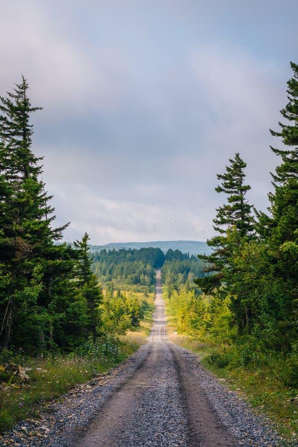 Uma estrada de terra e pinheiros em Dolly Sods Wilderness, floresta nacional de Monongahela, West Virginia foto de stock royalty free