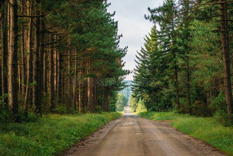 Uma estrada de terra e pinheiros em Dolly Sods Wilderness, floresta nacional de Monongahela, West Virginia imagem de stock