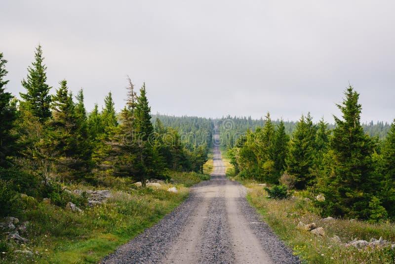 Uma estrada de terra e pinheiros em Dolly Sods Wilderness, floresta nacional de Monongahela, West Virginia fotografia de stock royalty free