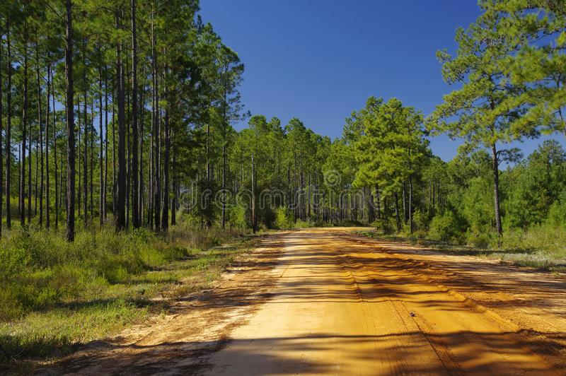 Uma estrada do cascalho no parque estadual de Talquin do lago e no Forest Tallahassee, Florida fotografia de stock