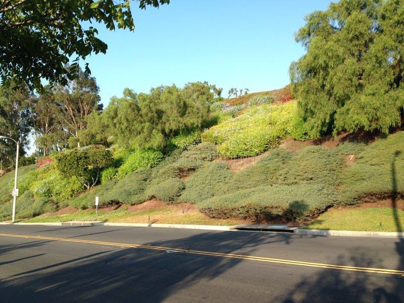Uma estrada em declive no monte do sinal, Califórnia imagens de stock royalty free