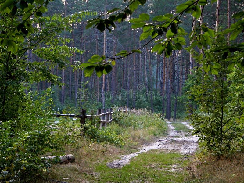 Uma estrada pisada e uma cerca pequena na floresta imagem de stock royalty free