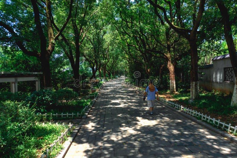 Uma estrada sarapintado da sombra da árvore fotos de stock royalty free