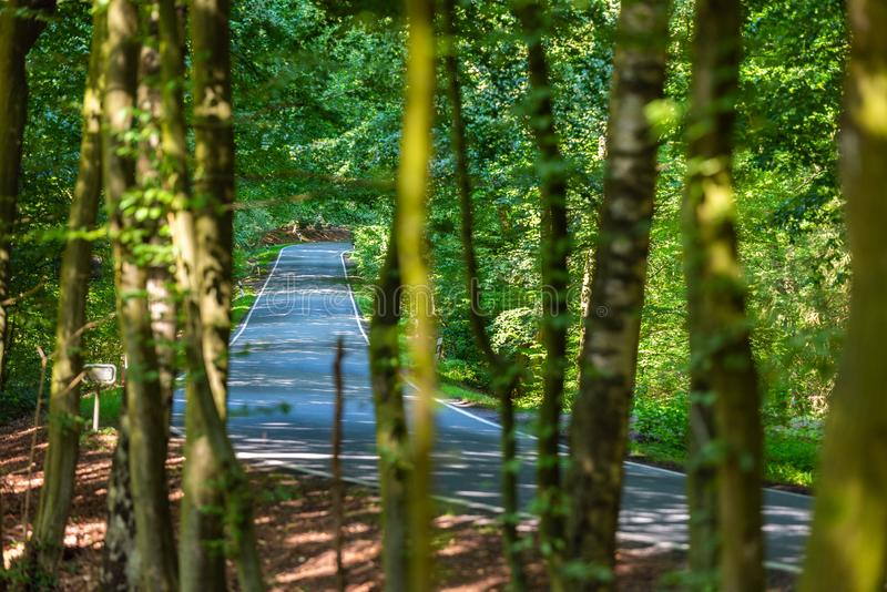 Uma estrada secundária perigosa em uma floresta da rena apenas que chove canivetes assim em Alemanha fotografia de stock royalty free
