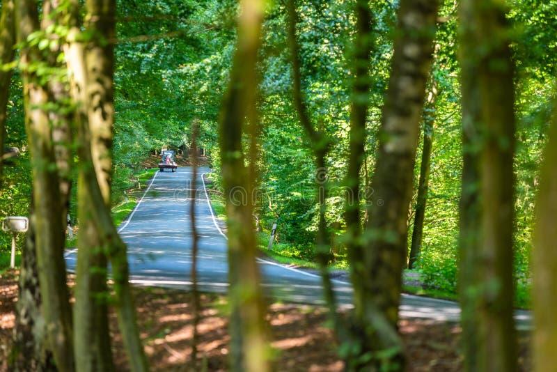 Uma estrada secundária perigosa em uma floresta da rena apenas que chove canivetes assim em Alemanha fotografia de stock