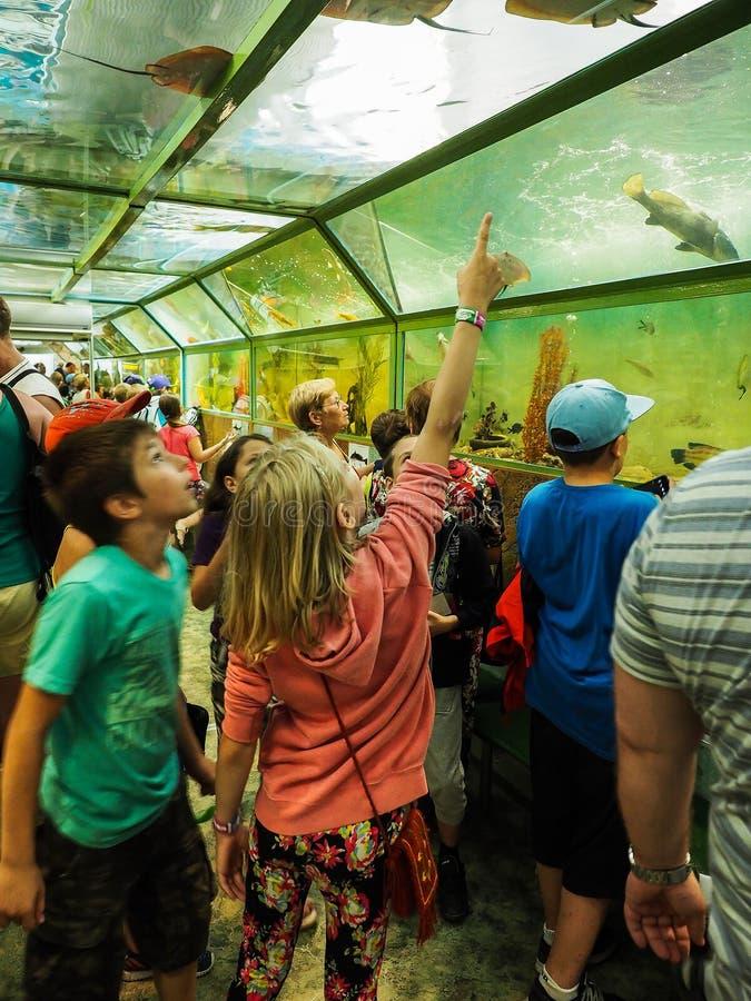Uma excursão educacional para crianças dos acampamentos na cidade do russo de Anapa fotos de stock