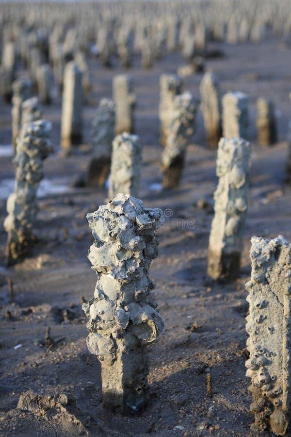 Uma exploração agrícola da ostra foto de stock
