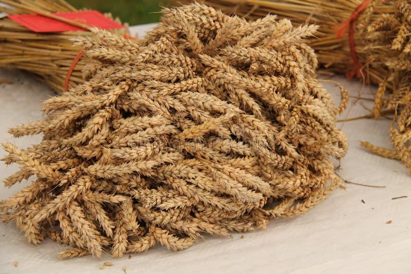 Download Trigo colhido. foto de stock. Imagem de agricultura, cabeças - 29845878