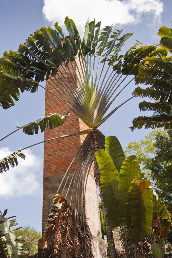 Download Fábrica do cana-de-açúcar imagem de stock. Imagem de caribbean - 29842081