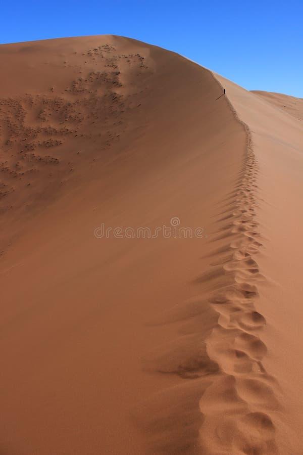 Uma figura deixa pegadas em uma duna gigante no coração de Sossuvlei imagem de stock