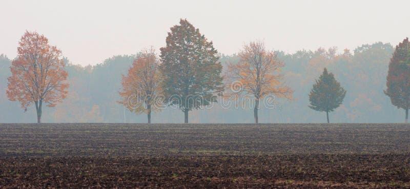 Uma fileira das árvores com amarelo e vermelho sae no meio do campo na perspectiva de uma floresta enevoada imagem de stock royalty free