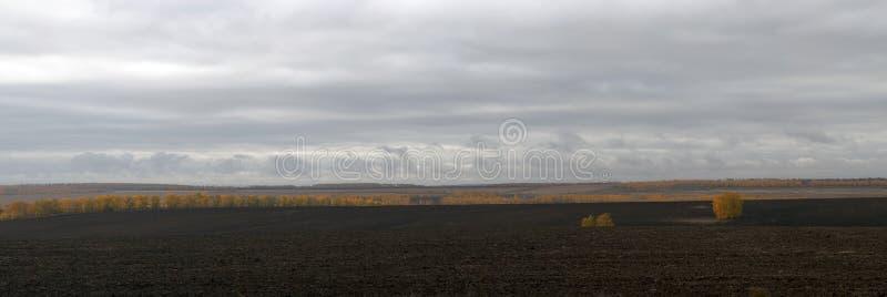 Uma fileira das árvores na borda de um campo no outono fotografia de stock royalty free