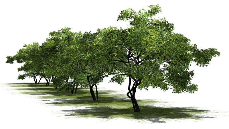 Uma fileira de árvores de limão com frutos um erea verde ilustração do vetor