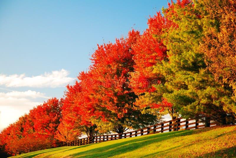 Uma fileira de cores de outono em uma estrada country foto de stock royalty free