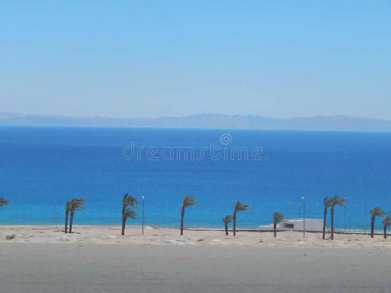 Uma fileira magro das palmeiras contra o azul do Mar Vermelho imagem de stock royalty free