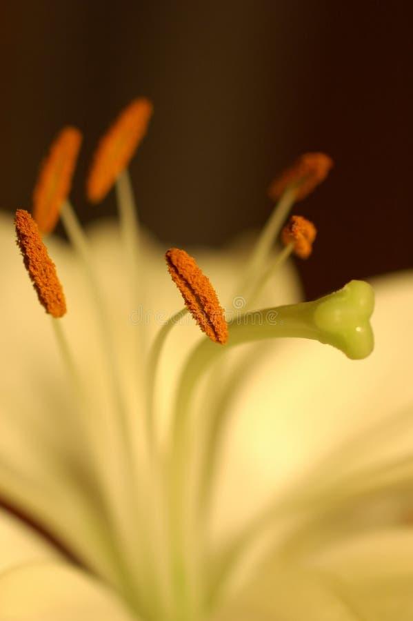 Uma Flor Imagem de Stock Royalty Free