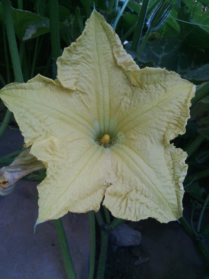 Uma flor fotografia de stock royalty free