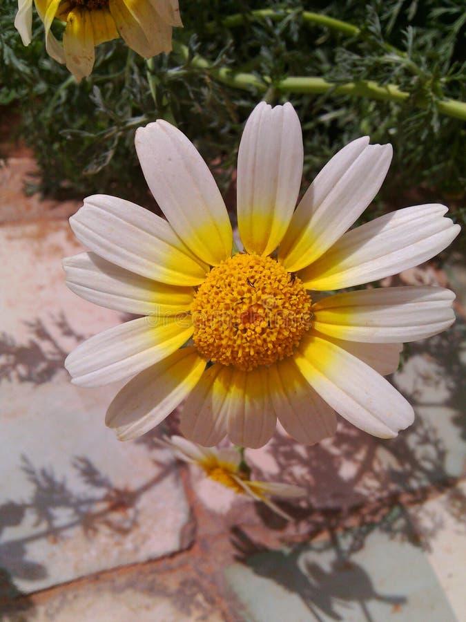 Uma flor imagem de stock