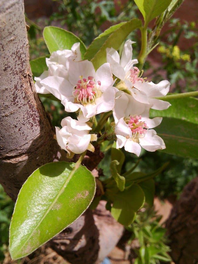 Uma flor fotografia de stock