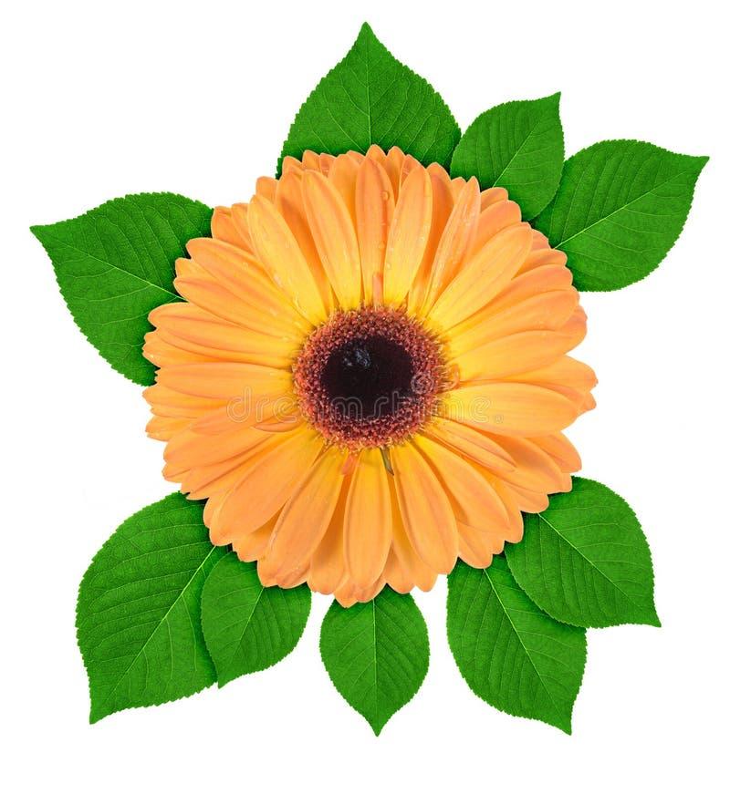 Uma flor alaranjada com folha verde foto de stock