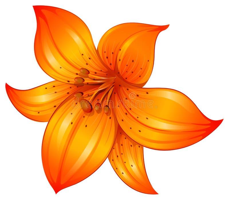Uma flor alaranjada do lírio ilustração do vetor