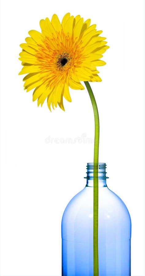 Uma flor amarela isolada fotos de stock