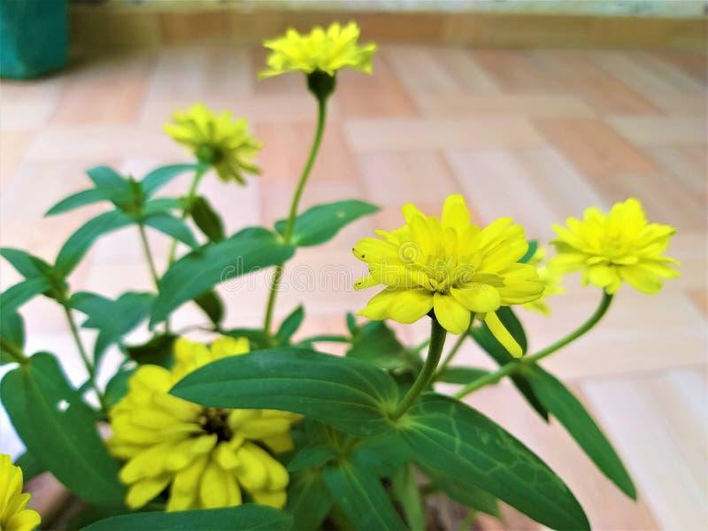 Uma flor amarelada bonita & umas folhas verdes fotografia de stock royalty free